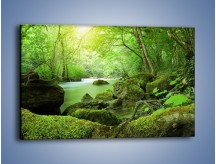 Obraz na płótnie – Las opanowany przez zieleń – jednoczęściowy prostokątny poziomy KN323