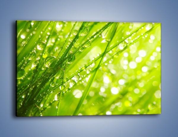 Obraz na płótnie – Trawa ubrana w wodne korale – jednoczęściowy prostokątny poziomy KN341