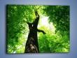 Obraz na płótnie – Drzewo bardzo wysokie – jednoczęściowy prostokątny poziomy KN344