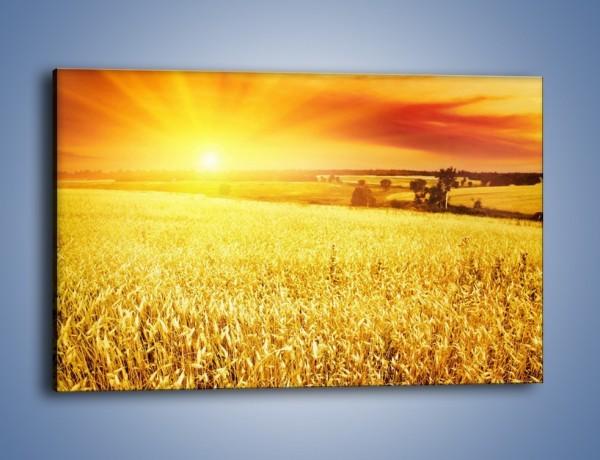 Obraz na płótnie – Zboże złote jak słońce – jednoczęściowy prostokątny poziomy KN398
