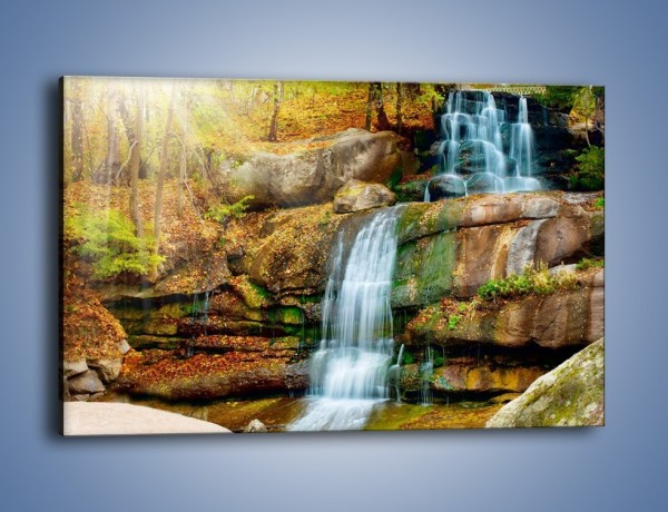 Obraz na płótnie – Leśne podłoże późną jesienią – jednoczęściowy prostokątny poziomy KN563