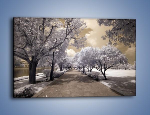 Obraz na płótnie – Parkowa aleja w sepii – jednoczęściowy prostokątny poziomy KN734