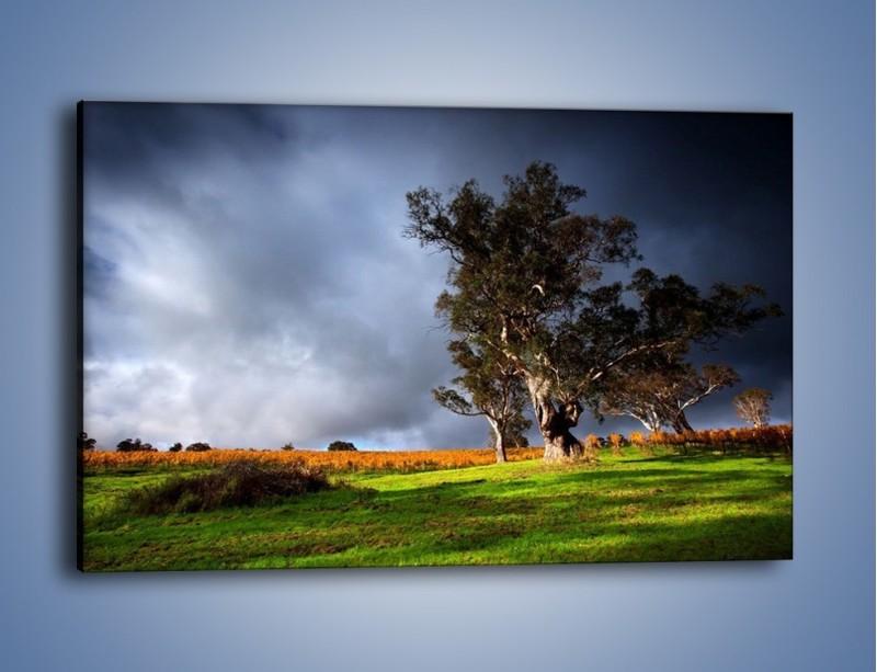 Obraz na płótnie – Burzowe chmury nad polaną – jednoczęściowy prostokątny poziomy KN748