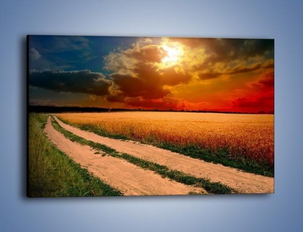 Obraz na płótnie – Zbożowa polana i jej cały urok – jednoczęściowy prostokątny poziomy KN776
