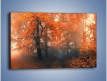 Obraz na płótnie – Mgła w czerwonym lesie – jednoczęściowy prostokątny poziomy KN804