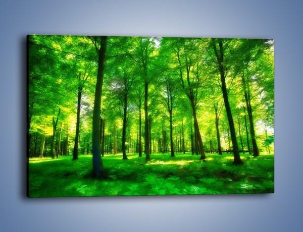Obraz na płótnie – Dywan z zielonych paproci – jednoczęściowy prostokątny poziomy KN850