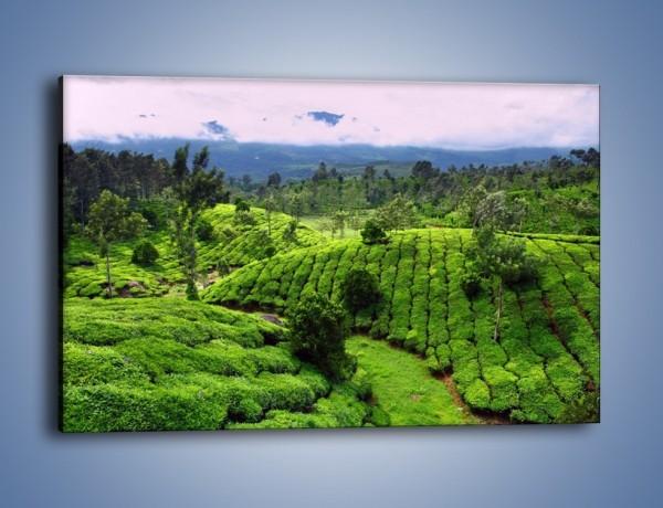 Obraz na płótnie – Rozległa zielona kraina – jednoczęściowy prostokątny poziomy KN872