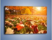 Obraz na płótnie – Jesień na trawie – jednoczęściowy prostokątny poziomy KN966