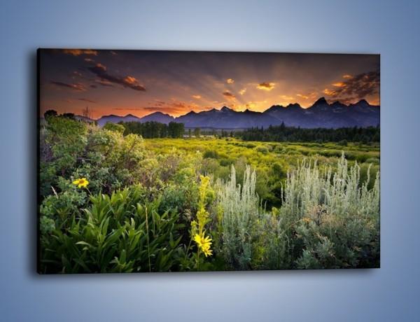 Obraz na płótnie – Wieczorny spokój na polanie – jednoczęściowy prostokątny poziomy KN987