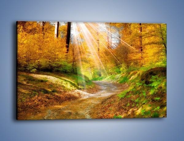 Obraz na płótnie – Promienną i słoneczną ścieżką przez las – jednoczęściowy prostokątny poziomy KN989