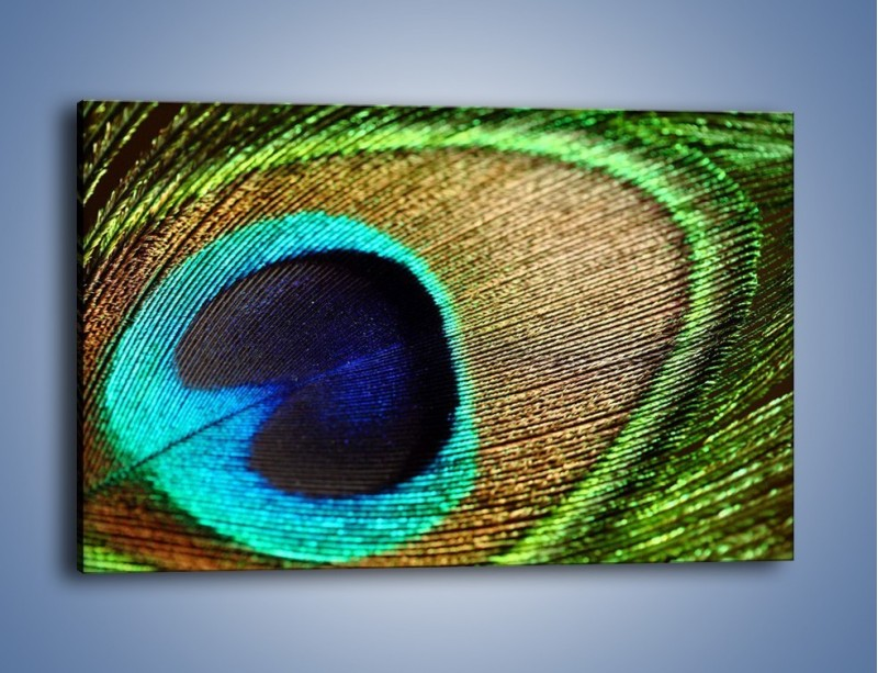Obraz na płótnie – Cudowne pawie oko – jednoczęściowy prostokątny poziomy O048