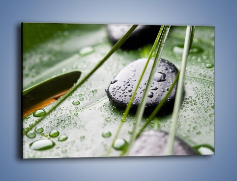 Obraz na płótnie – Krople deszczu na liściu – jednoczęściowy prostokątny poziomy O203