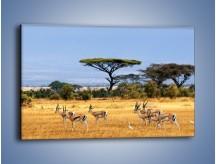 Obraz na płótnie – Antylopy w słonecznej afryce – jednoczęściowy prostokątny poziomy Z003