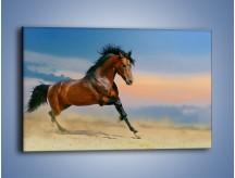 Obraz na płótnie – Brązowy koń na pustyni – jednoczęściowy prostokątny poziomy Z011