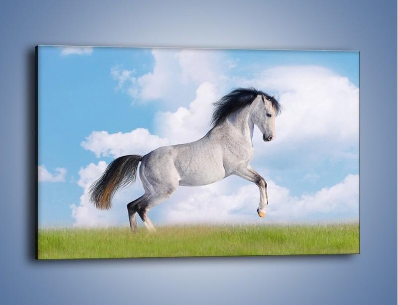 Obraz na płótnie – Białe obłoki i koń – jednoczęściowy prostokątny poziomy Z019