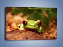 Obraz na płótnie – Bystre oczka małej żabki – jednoczęściowy prostokątny poziomy Z023