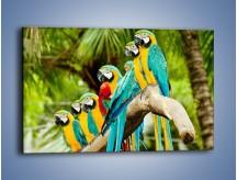 Obraz na płótnie – Kolorowe papugi w szeregu – jednoczęściowy prostokątny poziomy Z029