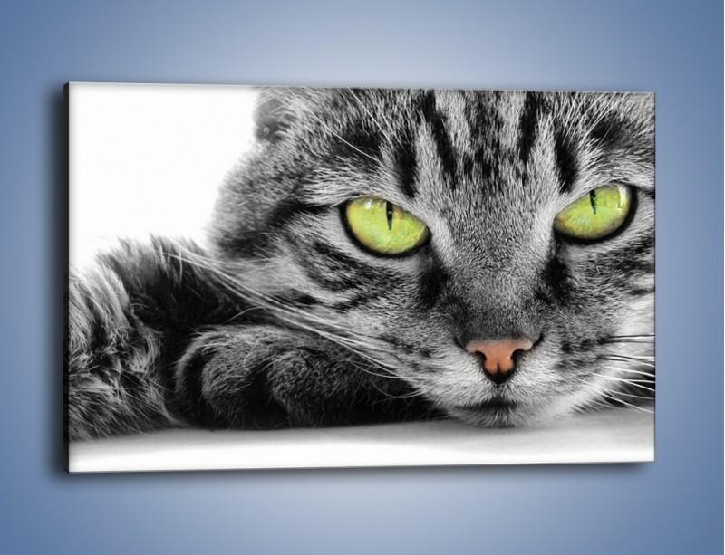 Obraz na płótnie – Obserwujący koci wzrok – jednoczęściowy prostokątny poziomy Z031