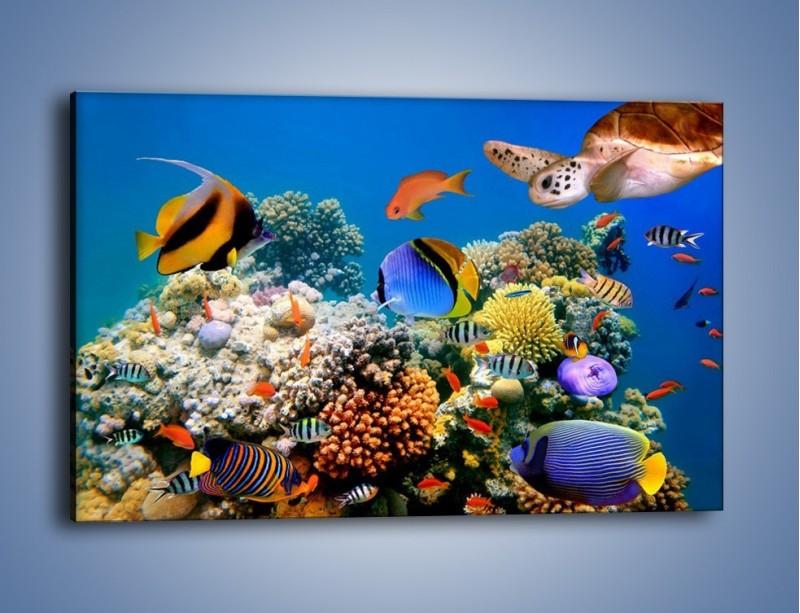 Obraz na płótnie – Wodny świat ryb – jednoczęściowy prostokątny poziomy Z041