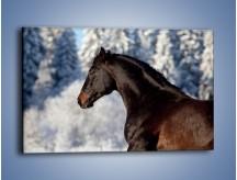 Obraz na płótnie – Brązowy ogier na zimowym spacerze – jednoczęściowy prostokątny poziomy Z056