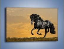 Obraz na płótnie – Bieg z koniem po polanie – jednoczęściowy prostokątny poziomy Z057