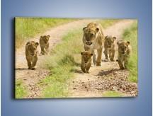 Obraz na płótnie – Spacer z małymi lwiątkami – jednoczęściowy prostokątny poziomy Z112