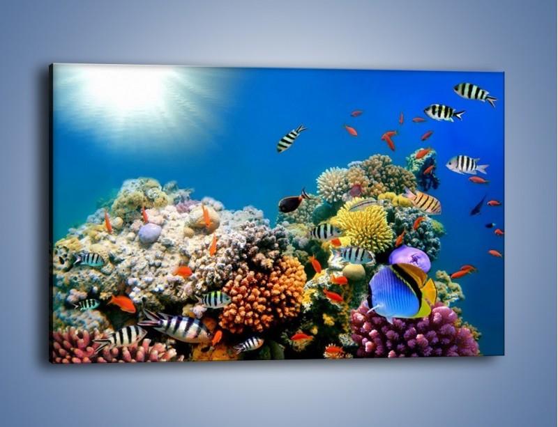 Obraz na płótnie – Fauna i kolorowi towarzysze – jednoczęściowy prostokątny poziomy Z116