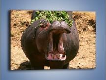 Obraz na płótnie – Hipopotam u dentysty – jednoczęściowy prostokątny poziomy Z117