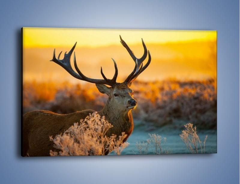 Obraz na płótnie – Ciężkie poroże jelenia – jednoczęściowy prostokątny poziomy Z165