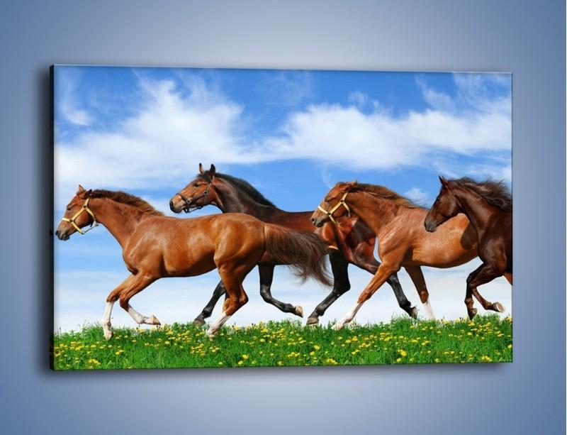 Obraz na płótnie – Galopujące stado brązowych koni – jednoczęściowy prostokątny poziomy Z172