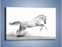 Obraz na płótnie – Wzburzony arab na białym tle – jednoczęściowy prostokątny poziomy Z173