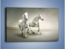 Obraz na płótnie – Dobrany duet arabów – jednoczęściowy prostokątny poziomy Z176