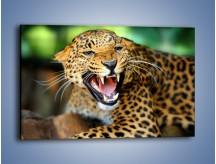 Obraz na płótnie – Jaguar z pazurem – jednoczęściowy prostokątny poziomy Z184