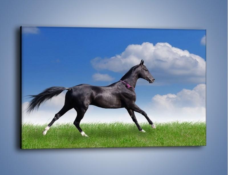 Obraz na płótnie – Dziki koń w biegu – jednoczęściowy prostokątny poziomy Z194