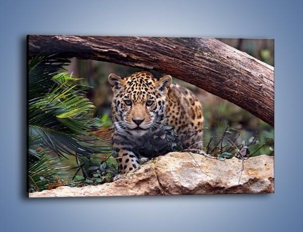 Obraz na płótnie – Jaguar w gotowości – jednoczęściowy prostokątny poziomy Z198
