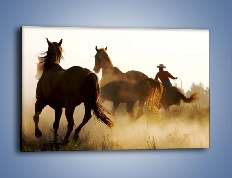 Obraz na płótnie – Cowboy wśród koni – jednoczęściowy prostokątny poziomy Z206