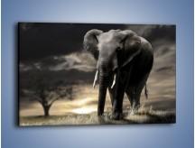 Obraz na płótnie – Smutna wędrówka słoni – jednoczęściowy prostokątny poziomy Z207