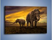 Obraz na płótnie – Ciekawość małego słonika – jednoczęściowy prostokątny poziomy Z212
