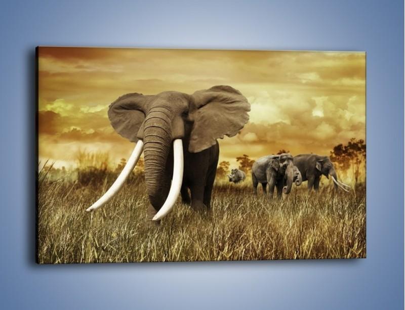 Obraz na płótnie – Drogocenne kły słonia – jednoczęściowy prostokątny poziomy Z214