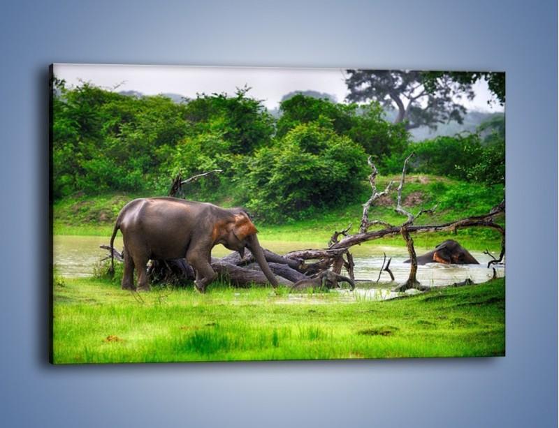 Obraz na płótnie – Kąpiel ze słoniem – jednoczęściowy prostokątny poziomy Z216