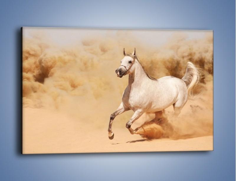 Obraz na płótnie – Klacz w tumanach piasku – jednoczęściowy prostokątny poziomy Z233