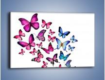 Obraz na płótnie – Rodzina kolorowych motyli – jednoczęściowy prostokątny poziomy Z235