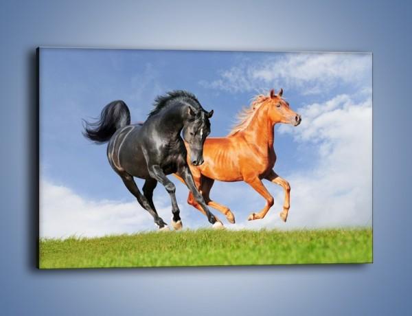 Obraz na płótnie – Czarny rudy i koń – jednoczęściowy prostokątny poziomy Z241
