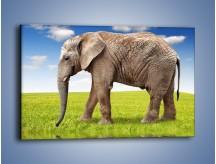 Obraz na płótnie – Odbicie słonia w wodnym lustrze – jednoczęściowy prostokątny poziomy Z245