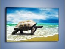 Obraz na płótnie – Jak tu nie kochać żółwi – jednoczęściowy prostokątny poziomy Z251