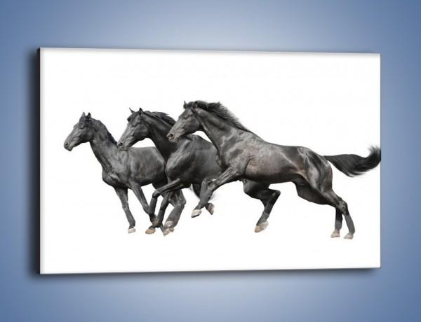 Obraz na płótnie – Kadrowe ujęcie mustanga – jednoczęściowy prostokątny poziomy Z253