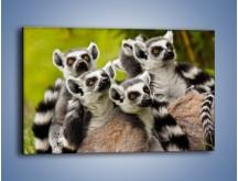 Obraz na płótnie – Wszystko wiedzące lemury – jednoczęściowy prostokątny poziomy Z259