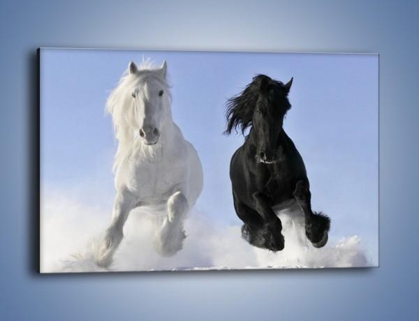 Obraz na płótnie – Czarno-biały wyścig konny – jednoczęściowy prostokątny poziomy Z263