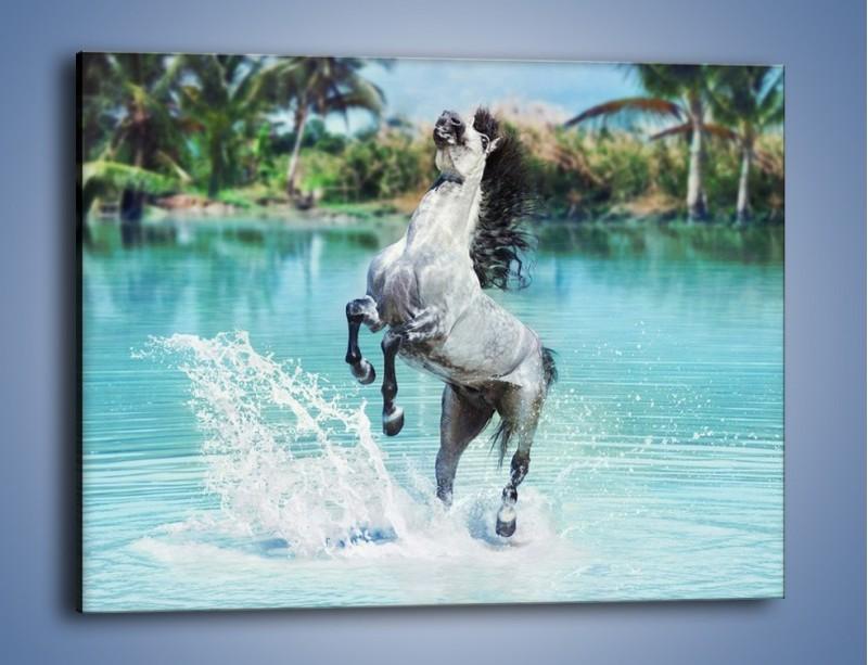 Obraz na płótnie – Wodna kąpiel konna – jednoczęściowy prostokątny poziomy Z267
