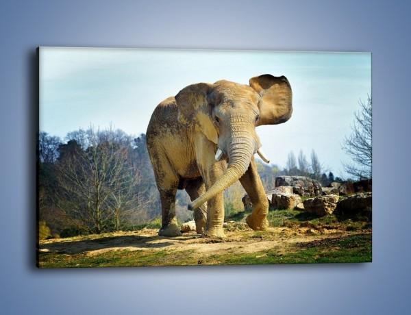 Obraz na płótnie – Ciężkie życie słonia – jednoczęściowy prostokątny poziomy Z273